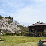 弥治郎こけし村の桜が見頃です