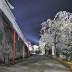 白石城の夜桜も堪能しましょう!
